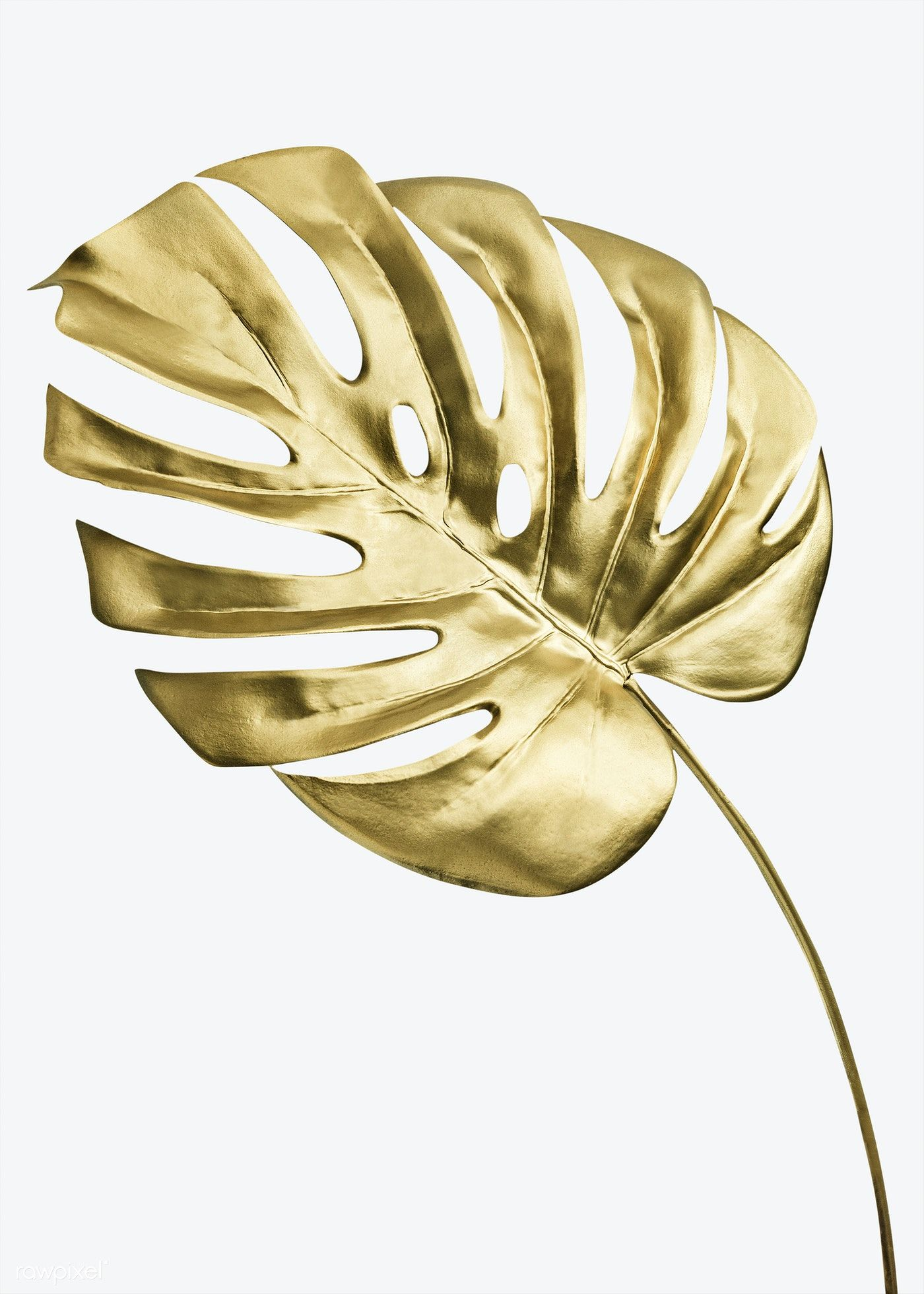 Download Premium Psd Of Golden Monstera Leaf On A White Background Mockup Monstera Leaf Monstera Black And White Background