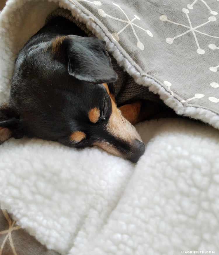 How to Make a DIY Burrow Dog Bed in 2020 Trendy dog beds