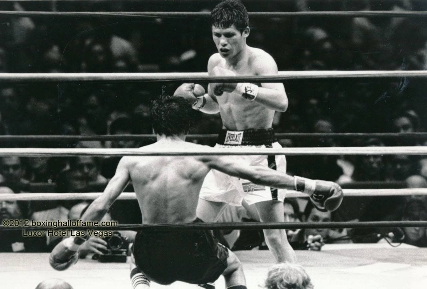 El leon de culiacan julio cesar chavez boxing for Boxing day meuble leon