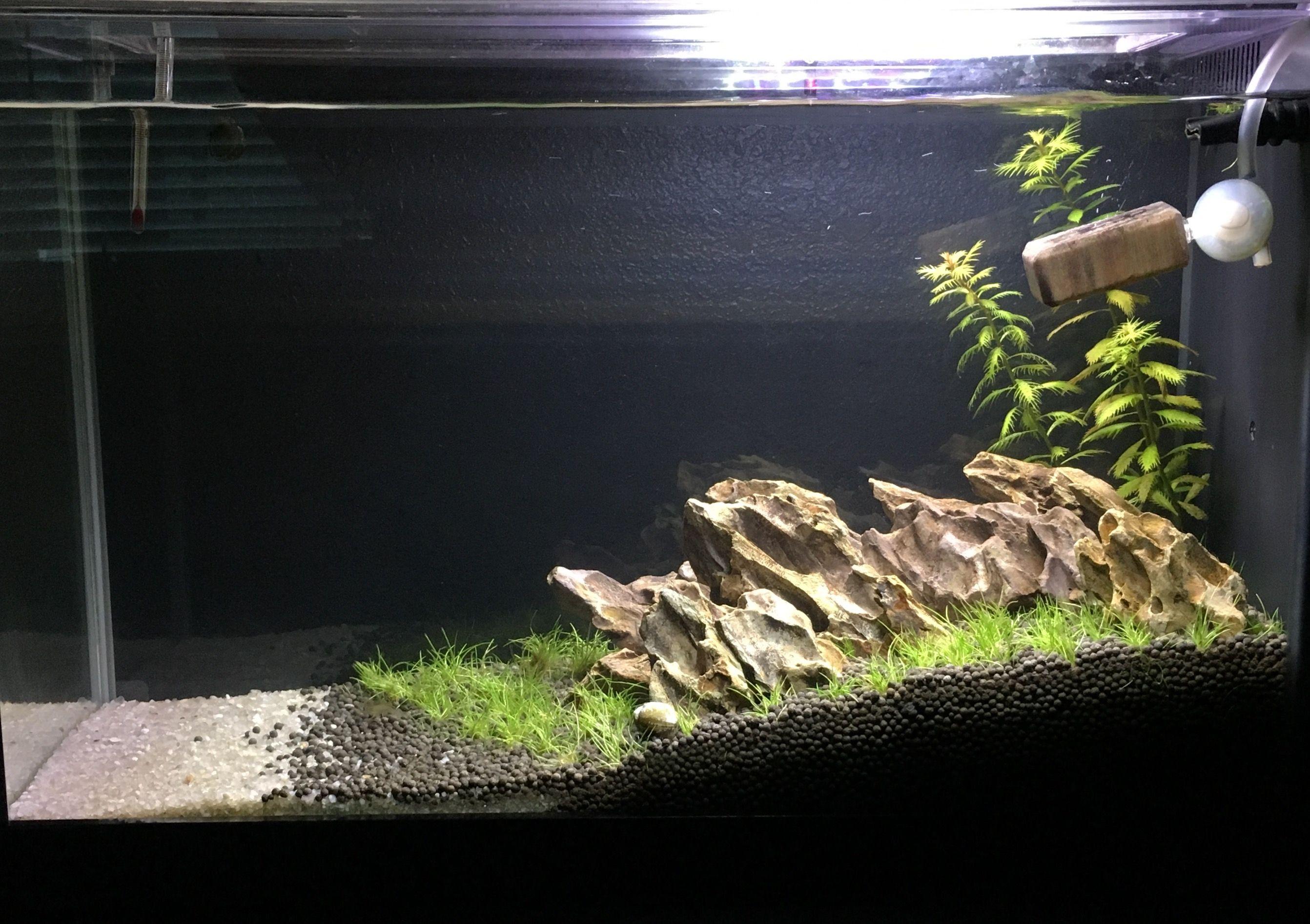September 2017 Fluval Spec V Fish Tank Aquascape Nano Tank