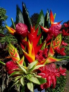 Flower Exotic Tropical Plants Check Out The Free Plant