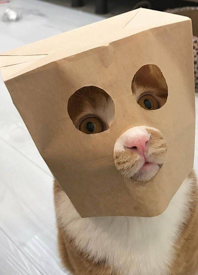 """Résultat de recherche d'images pour """"Pinterest chats droles"""""""
