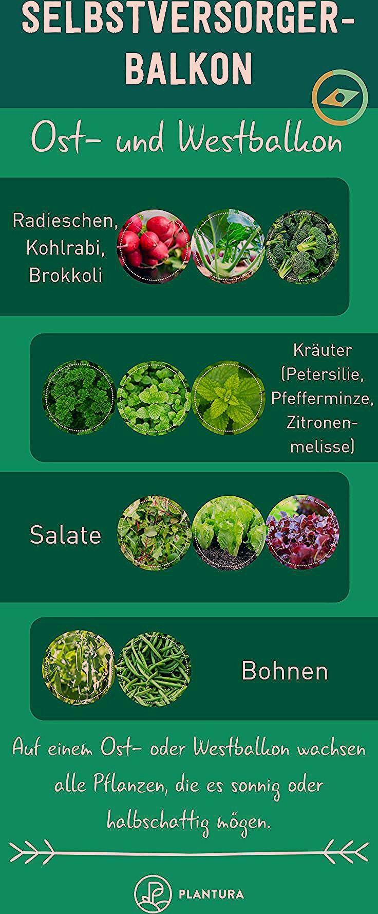 Photo of Selbstversorger-Balkon: Welche Pflanze für welchen Balkon? – Plantura