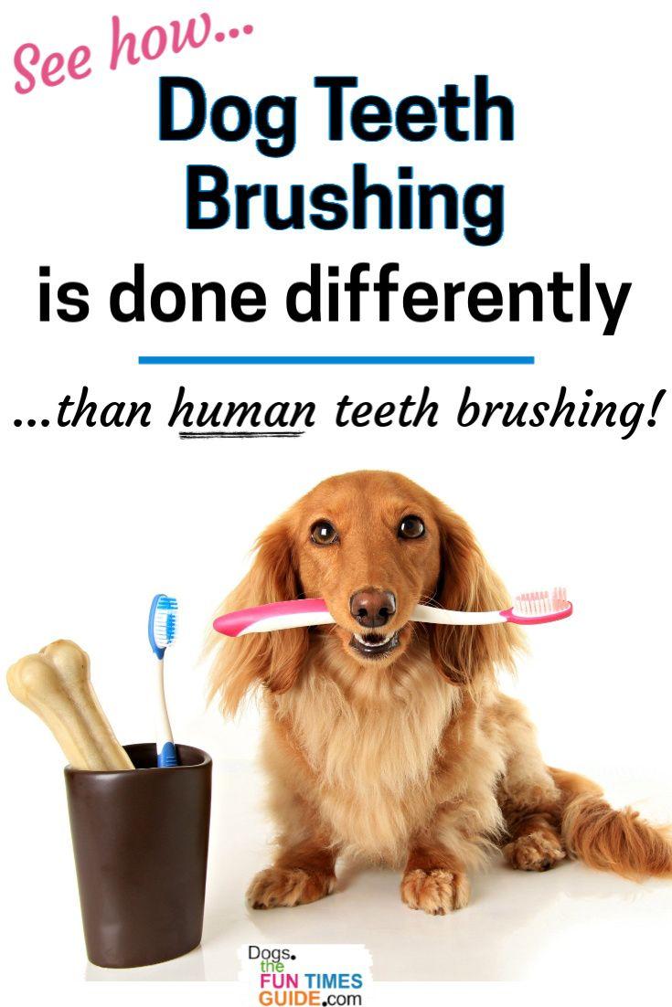 Dog teeth brushing tips see exactly how to brush your dog
