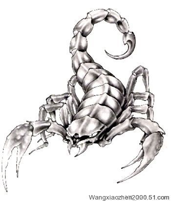 Scorpion Tattoo Pictures Picture Tattoos Scorpion Tattoo