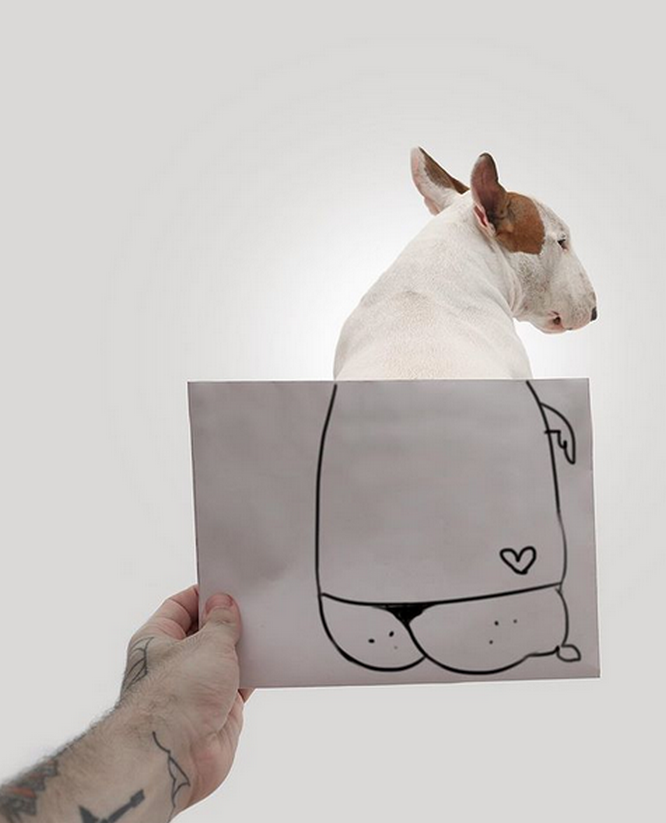 Creative Union: Brazilian Illustrator Rafael Mantesso and His Dog Jimmy the Charming | Журнал Ярмарки Мастеров