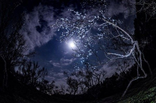 Image result for plum blossom with icicles in the moonlight