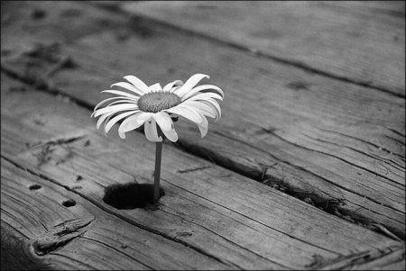 красивые картинки про любовь чёрно-белые