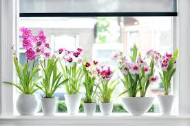 colors of may month - Google Search