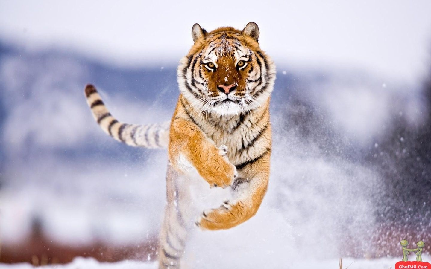 Nature - Winners Wallpaper - National Geographic Photo Contest ...