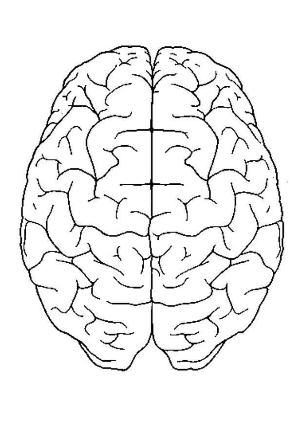 Coloring page brain, top view - img 4300 Coloring Activities - new coloring pages about science
