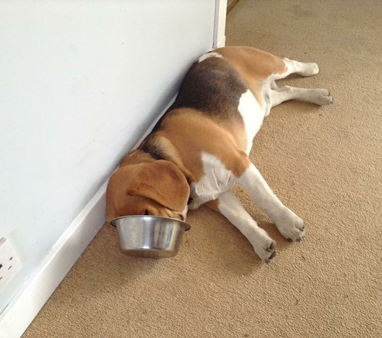 When Life Gives You Lemons Fall Asleep In Your Food Bowl