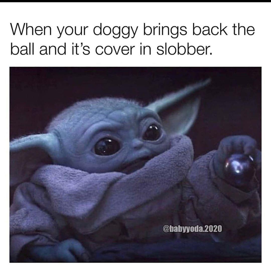Baby Yoda On Instagram Ew Follow Babyyoda I Am For More Star Wars And Baby Yoda Share Baby Yoda With A Friend Send In 2020 Yoda Funny Star Wars Memes Yoda Meme
