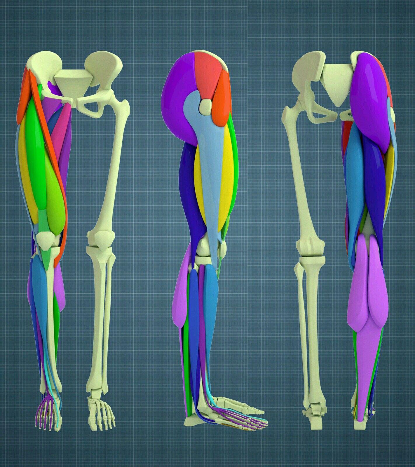 Pin de Gavin Rich en TutorialsAndNotes | Pinterest | Anatomía y Cómic