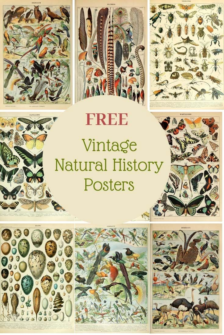 Photo of Free Printable Natural History Posters Of Adolphe Millot – Picture Box Blue