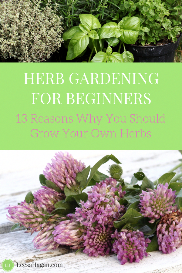 Herb Gardening 101: Why you should grow your own herbs ...
