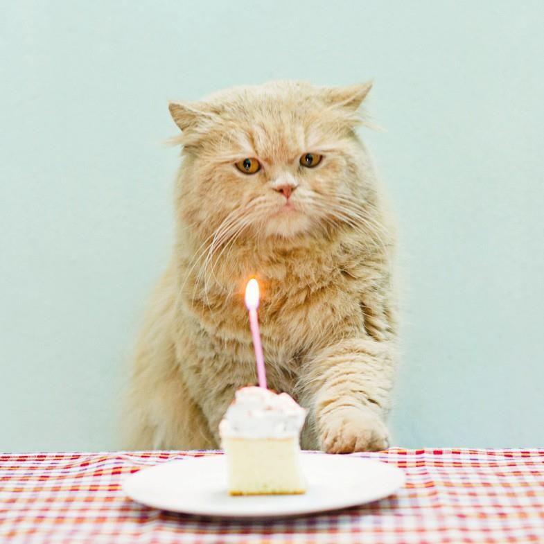 Grumpy cat birthday card grumpy cat and cat this is the perfect grumpy cat birthday card bookmarktalkfo Gallery