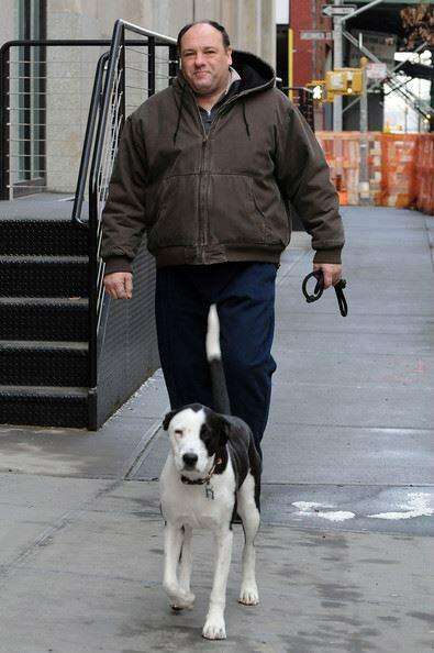 Dog Friendly Ireland On Pitbull Rescue Pitbulls Dog Friends