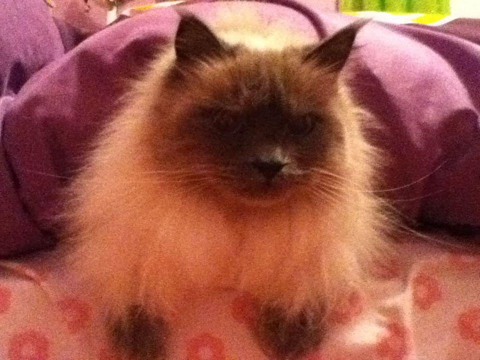 cutest kitty ever :)