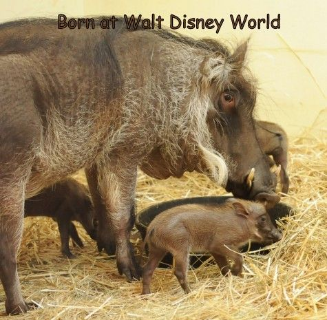 Born at Walt Disney World