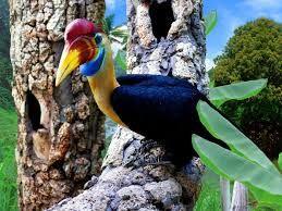 Afbeeldingsresultaat voor paradijsvogels
