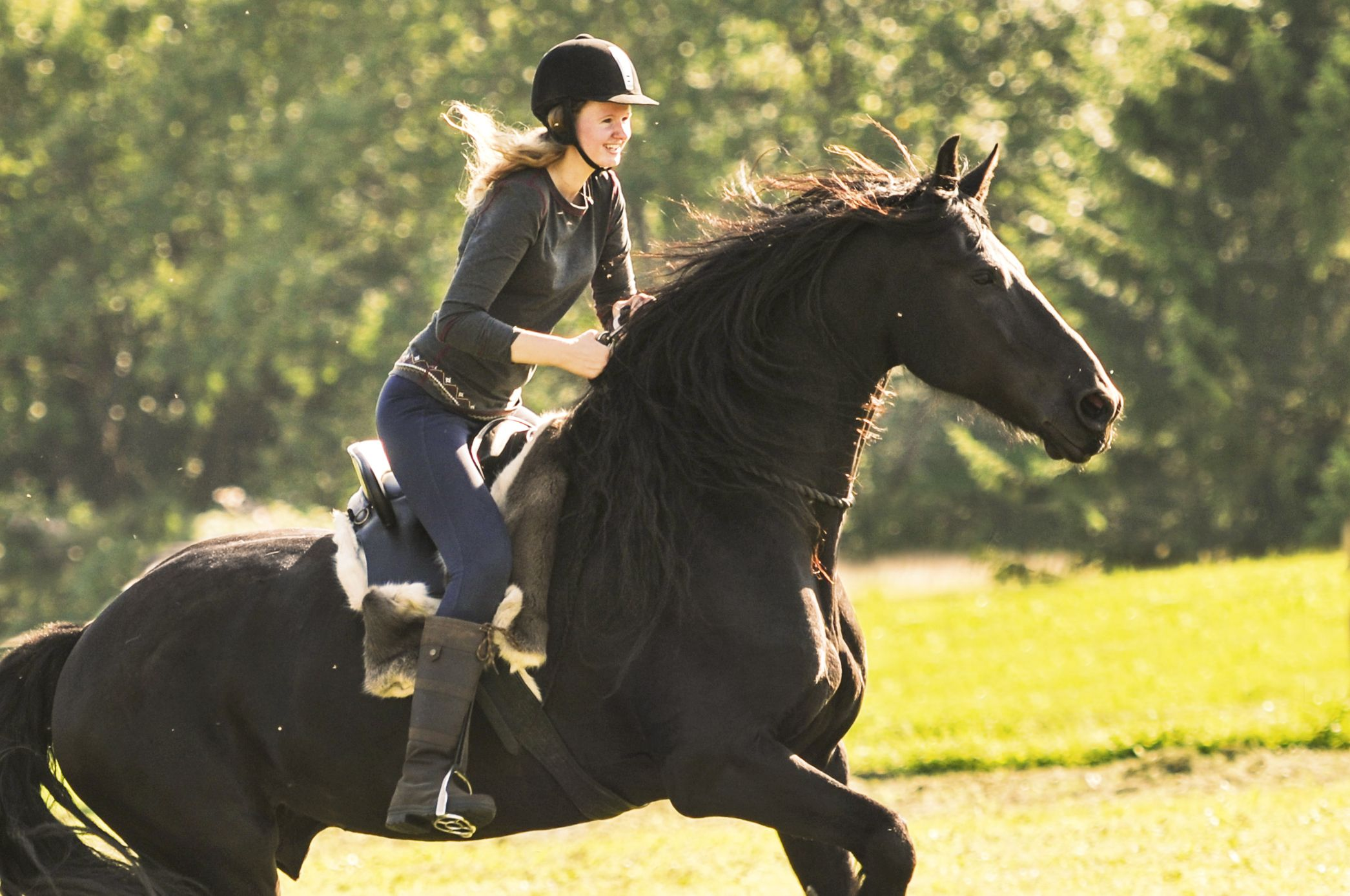 Bridleless for beginners Horse inspiration, Horses