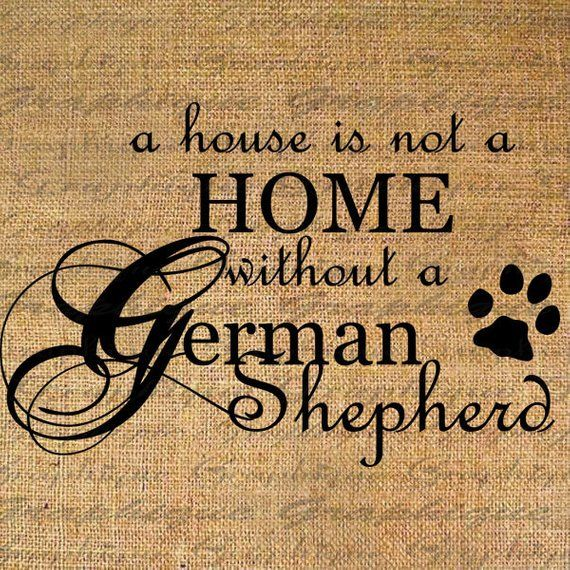The German Shepherd Dog In Word And Picture Download