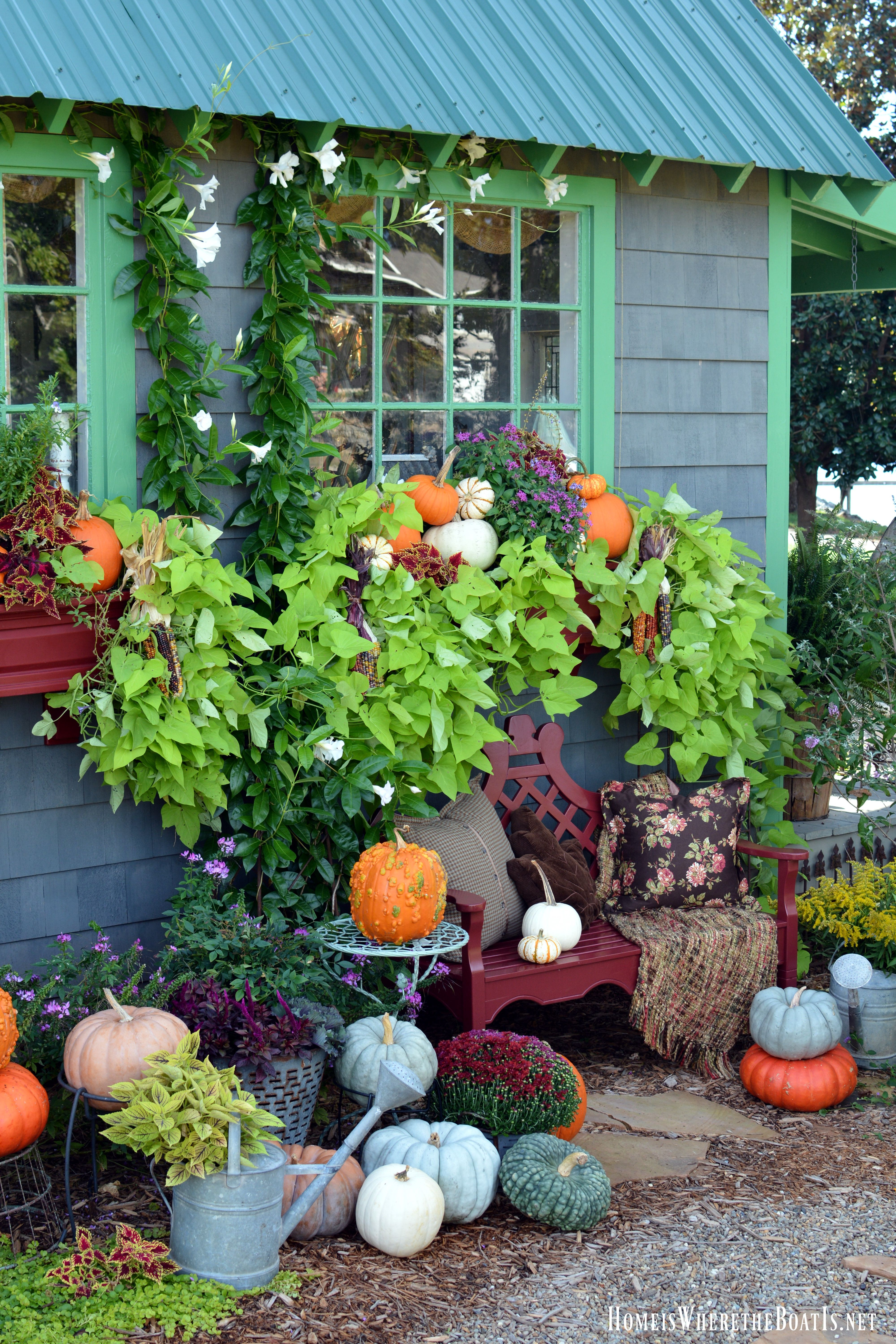 Potting Shed decorated for with pumpkins   homeiswheretheboatis.net ...