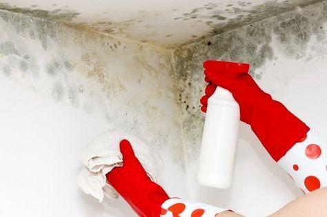Tipps Zur Entfernung Von Schimmel In Der Wohnung Mit Bildern Schimmel Entfernen Schimmel Im Bad Schimmel Wand