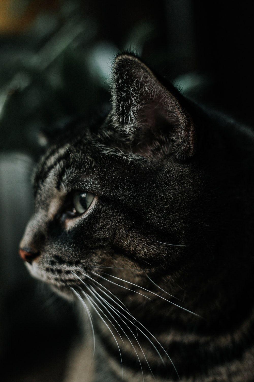 Grey Cat Names Grey Cat Names Cute Cat Names Grey Cats