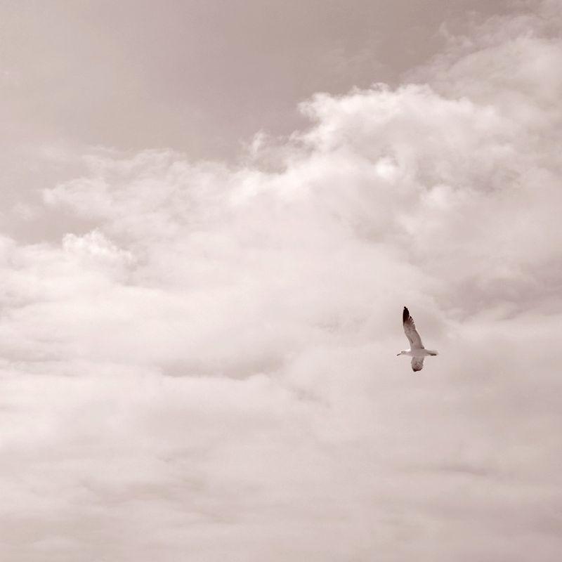 La vita è ciò che facciamo di essa. I viaggi sono i viaggiatori. Ciò che vediamo non è ciò che vediamo ma ciò che siamo. Fernando Pessoa (Praia das Maçãs) Relaxing enjoying life Feeling Free jornalistasdeimagens