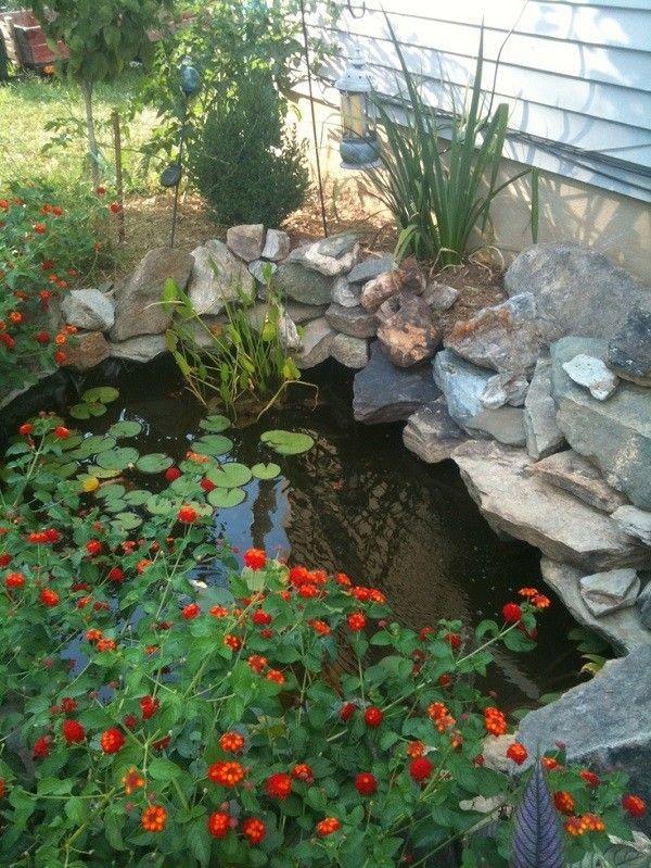 estanque pegado a la casa con pequeños lotos