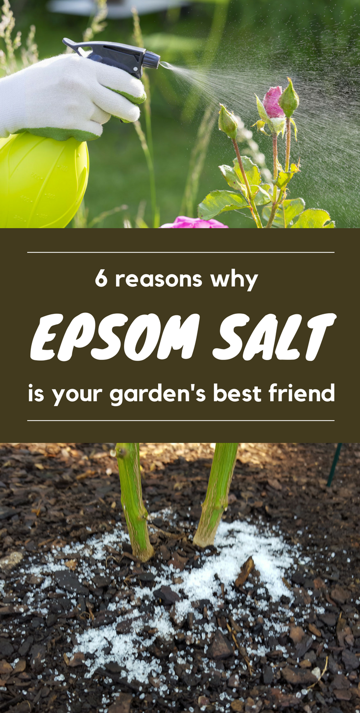 6 Reasons Why Epsom Salt is your Garden\'s Best Friend ...