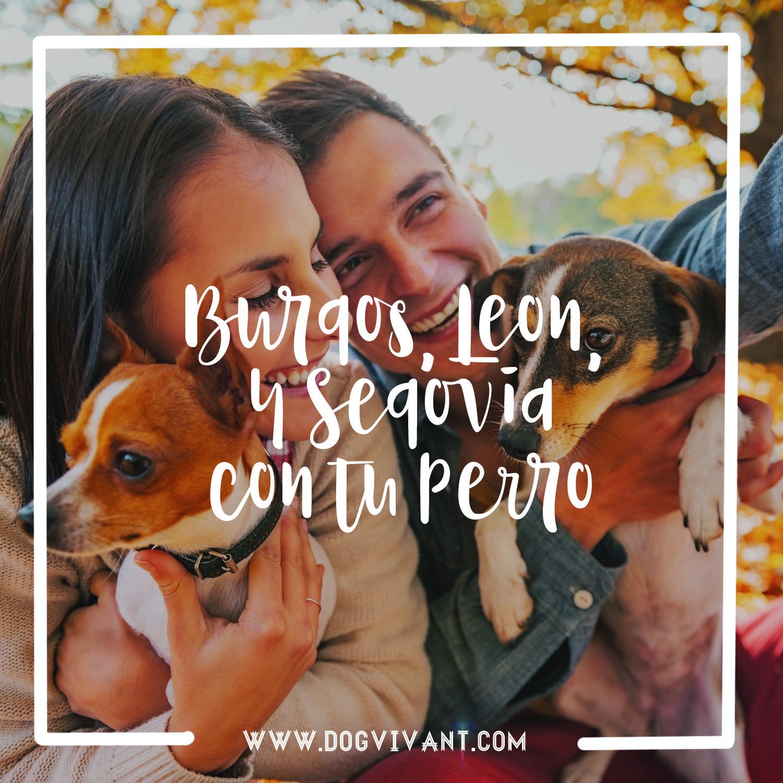 Descubre en Dog Vivant los mejores alojamientos dog-friendly de Castilla y León para disfrutar este otoño con tu perro.