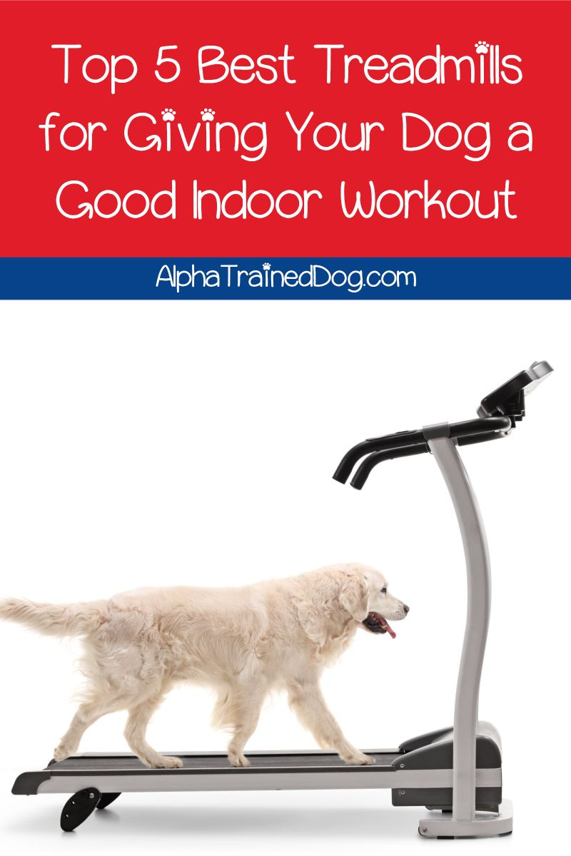 Looking For The Best Dog Treadmills To Give Fido A Workout When He