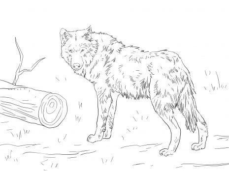 Euroasian Wolf coloring page   Konturen zeichnen   Pinterest ...