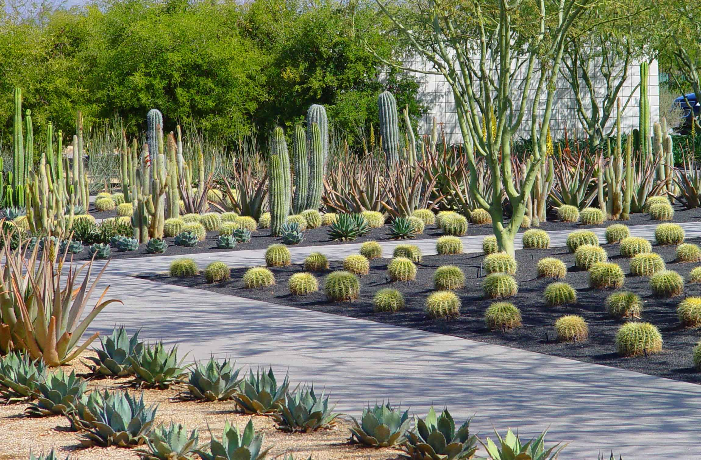 Modern desert landscape commercial google search for Cactus garden designs
