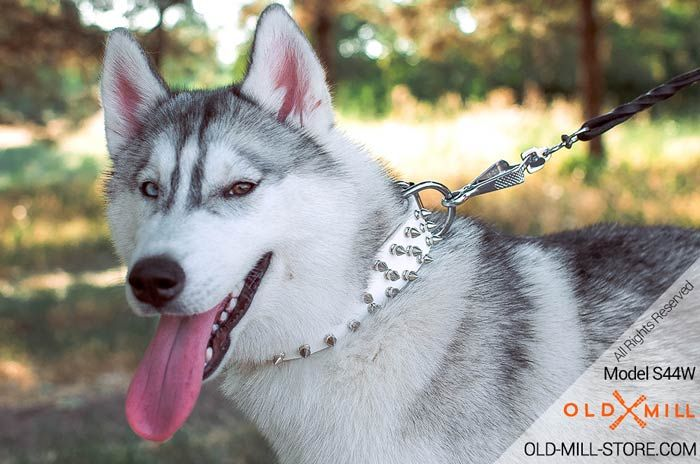 White Leather Spiked Dog Collar With 3 Rows Of Spikes Husky