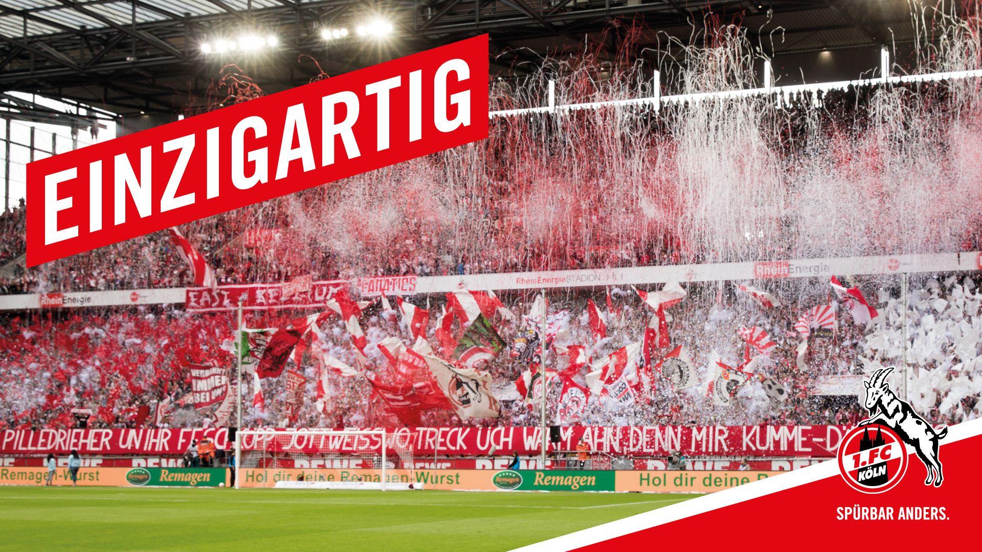 1. FC Köln | Wallpaper