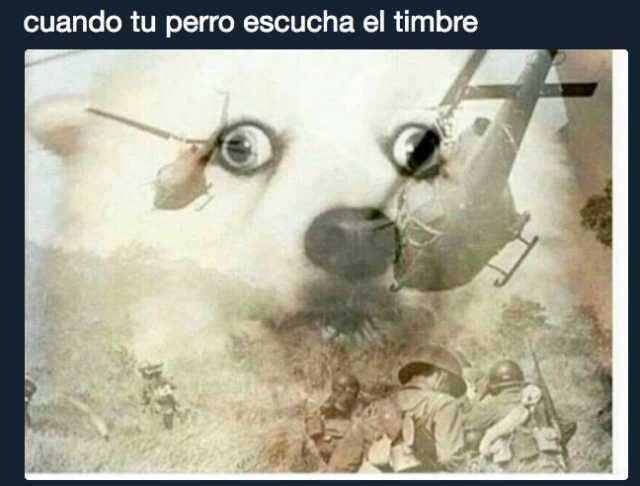 Perros 3perro Meme Memes Memes Hilarantes Memes Divertidos Imagenes Divertidas