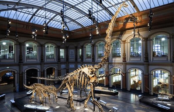Dinosaur Museum Dinosaur Museum Dinosaur History History Museum