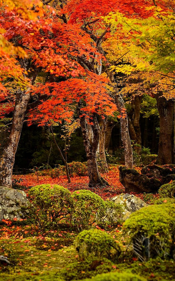 Pin by Kayla Boudreaux on All About Me | Autumn trees ...