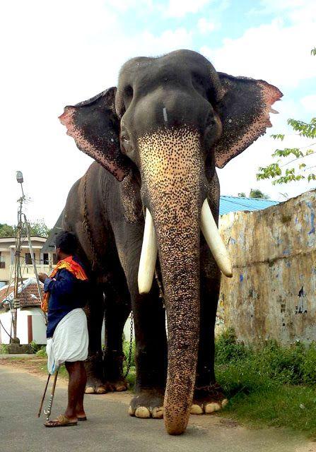 Mangalamkunnu Karnan | Elephant, Kerala, States of india