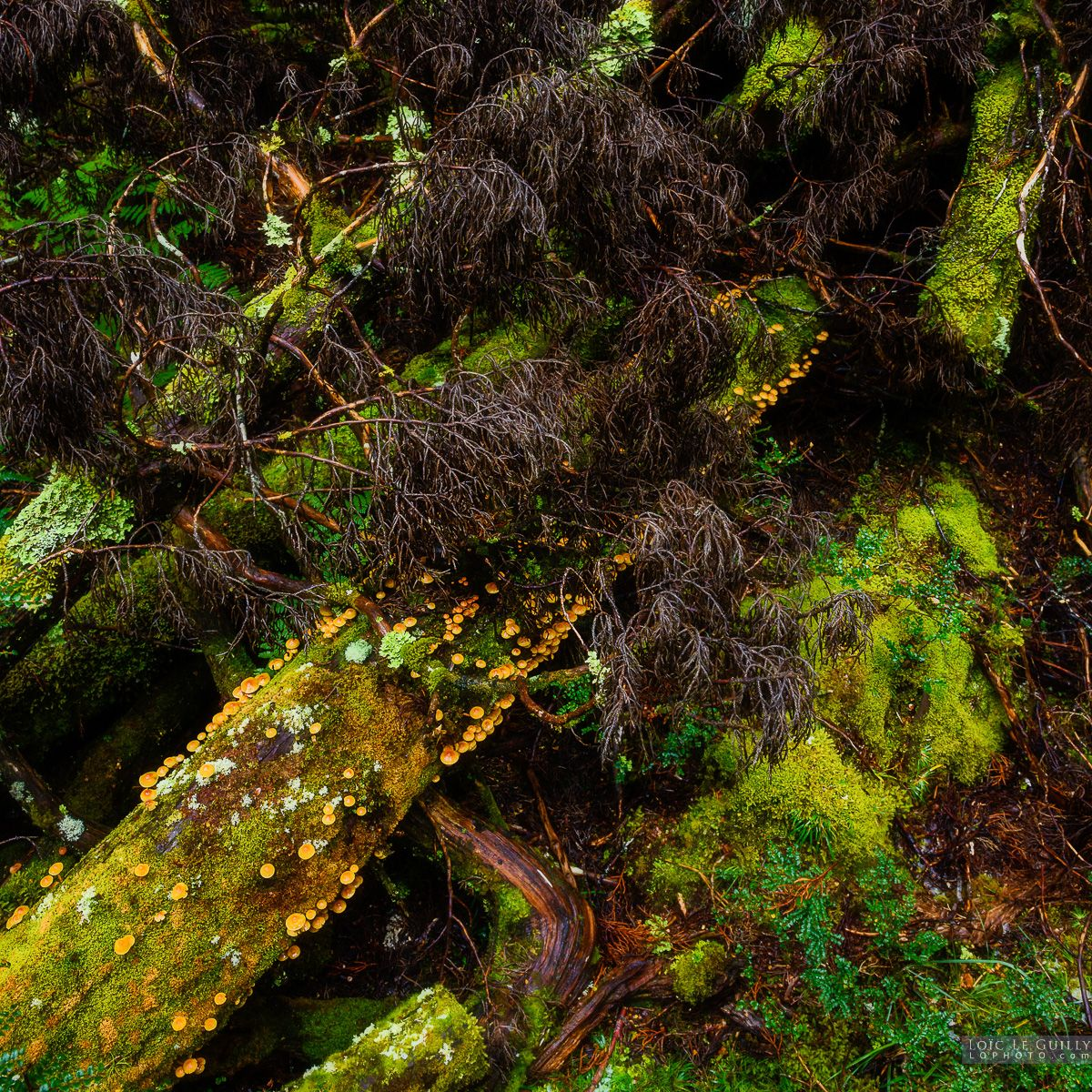 The messy, organic, moist and vibrant rainforest floor at