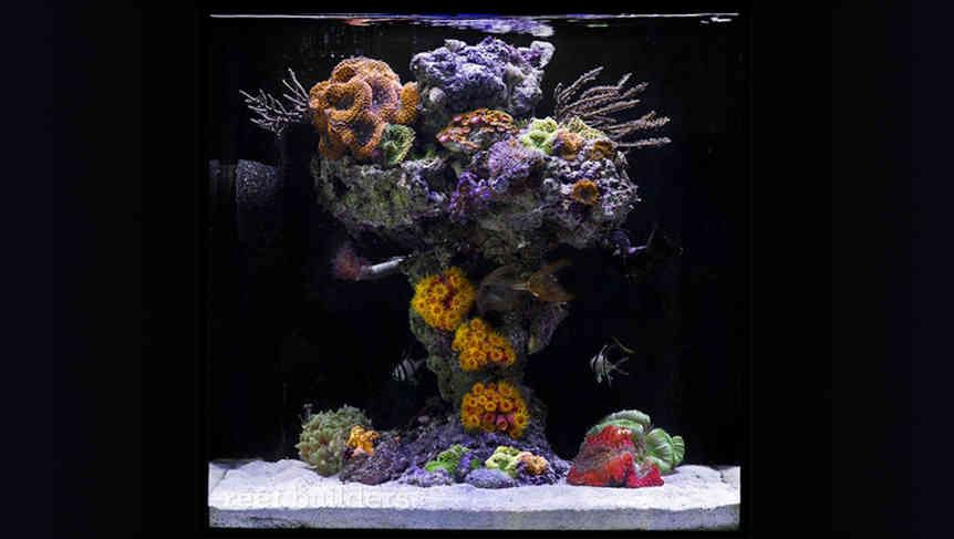 How To Order | Ceramic Rock Aquascapes | Reef tank ...
