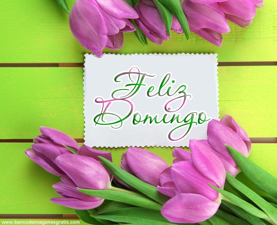 Excepcional Imagenes-Feliz-Domingo-con-Flores-Para-Compartir.png (900×732  OO81