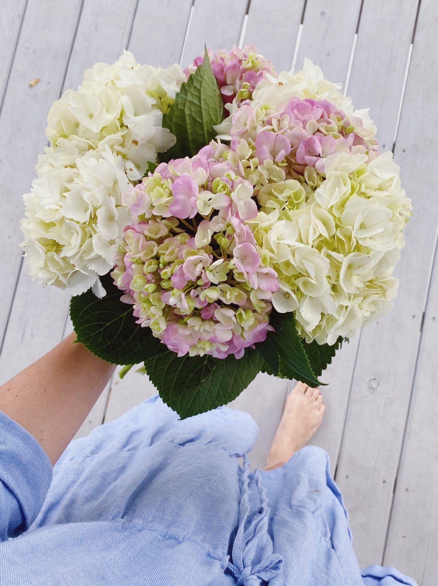 How I Revive Wilting Hydrangeas In 2020 Hydrangea Most Beautiful Flowers City Chic