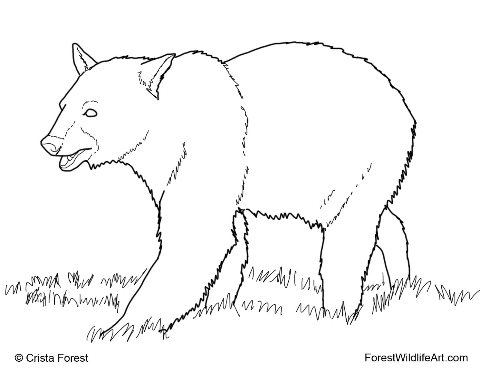 Coloring Pages Of A Black Bear. Learn Forest Animals Coloring Pages Grizzly Bear  Proficiency free images or bears to paint Wildlife Art Book