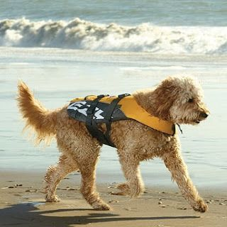 15 Beach Safety Tips for your Dogs   Australian Dog Lover