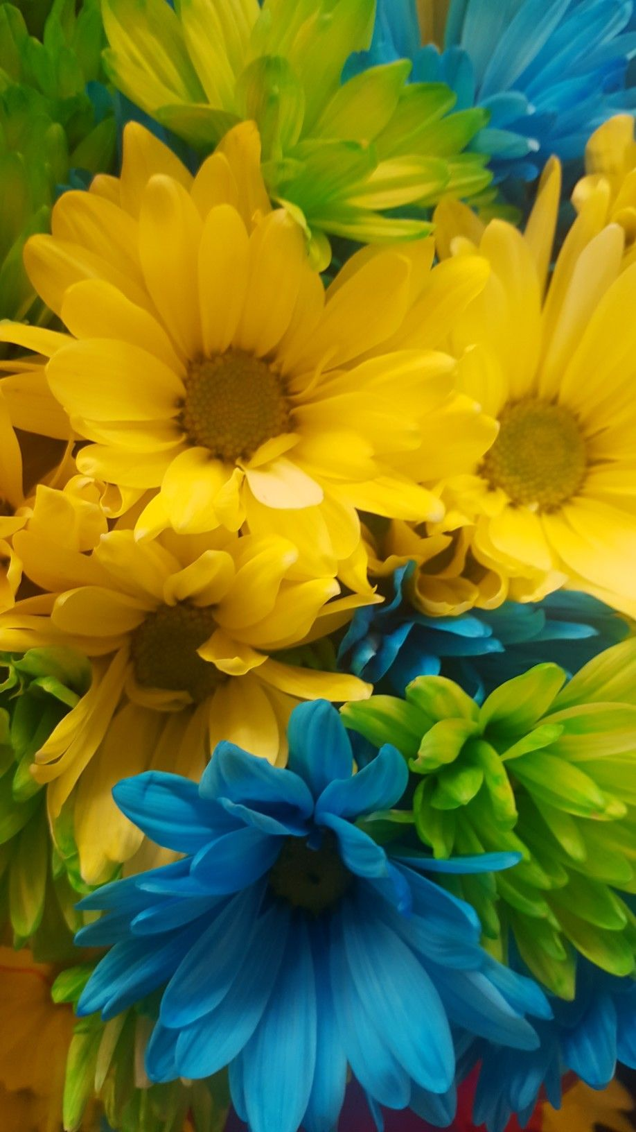 Pin by Rhonda Proffitt on Daisies (With images) Flower